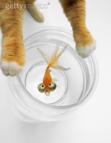 poisson-peureux.jpg